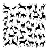 Deer animal silhouettes. High quality deer silhouettes. Fawn, doe, bucks and stags in various poses Stock Images