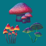 A high quality fantasy mushrooms set. Bright, cartoon, fantastic natural objects Stock Photos