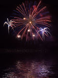 High quality firework Royalty Free Stock Photos
