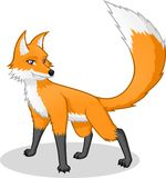 High Quality Fox Vector Cartoon Illustration Stock Photography