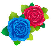High-quality fresh detailed roses Royalty Free Stock Images