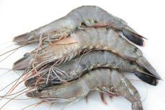 High quality fresh prawns royalty free stock image