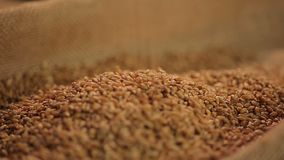 High quality grain seeds dropping in sack from elevator, organic food production. Stock footage stock video footage
