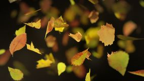 Falling autumn leafs loopable background