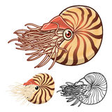 High Quality Nautilus Cartoon Character Include Flat Design and Line Art Version Stock Images