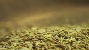 High quality oat seeds falling on sackcloth, agricultural product for sale. Stock footage stock video footage
