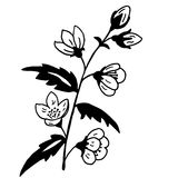 High quality original illustration of spring flower for decor,po Royalty Free Stock Image