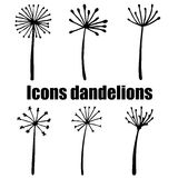 High quality original set of dandelions  on white backgr Stock Photo