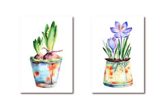 2 High quality painted watercolor- crocus and hyacinth Stock Photography