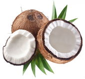 High-quality photos of coconuts. Royalty Free Stock Image