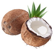 High-quality photos of coconuts. Royalty Free Stock Photography