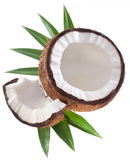 High-quality photos of coconuts. Royalty Free Stock Images