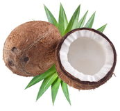 High-quality photos of coconuts. Stock Photography