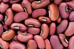 High quality seeds of vigna, legumes in a texture form for your garden. Can be used by seed producers. royalty free stock image