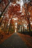 High red trees above road Royalty Free Stock Photo