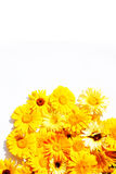 High res flower frame with space for copy. Spring, summer sunflowers background with white copy space above Royalty Free Stock Photo
