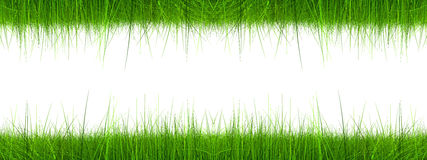 High resolution 3d green grass banner. Isolated on a white background Royalty Free Stock Images