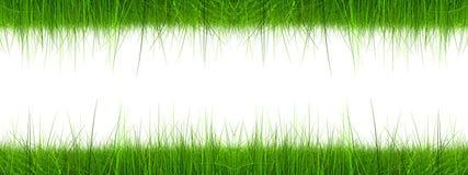 High resolution 3d green grass banner royalty free illustration