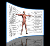 High resolution concept or conceptual 3D human anatomy. And muscle isolated on white background as metaphor to body Stock Photography