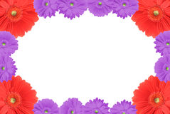 High resolution gerbera frame royalty free stock images