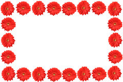 High resolution gerbera frame stock photo