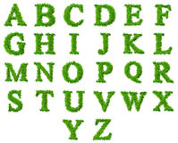High resolution grass font collection Stock Image