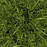High resolution green grass Royalty Free Stock Images