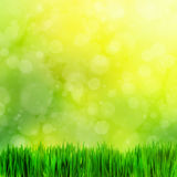 High resolution image of fresh green grass, nature blur Royalty Free Stock Images
