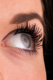 Portrait of a beautiful female eye Stock Photos