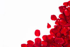 Romantic red rose petal frame Royalty Free Stock Image