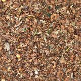 High resolution seemless texture of forest ground with autumn leaves for 3d modelling with more than 6 megapixel in size