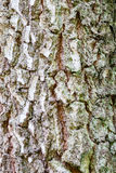High resolution texture of birch tree bark. Stock Images