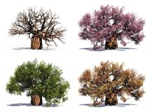 High resolution tree isolated Stock Image