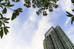 High rise building with green tree leaf in blue sky Stock Images