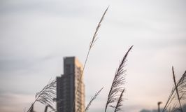 High-rise buildings design in downtown  over green hills with low trees and wild grasses. Urban design royalty free stock images