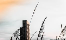 High-rise buildings design in downtown  over green hills with low trees and wild grasses. Urban design royalty free stock image