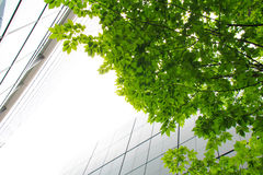 High-rise buildings and green leaf Royalty Free Stock Image