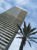 High rise and palm tree Royalty Free Stock Images