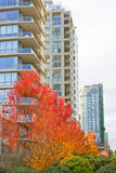 High rise skyline tower autumn Royalty Free Stock Photo