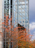 High rise and trees Stock Photos