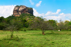 High rock under green forest Royalty Free Stock Photo