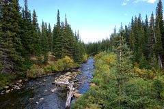 Free High Rocky Mountain Nature Preserve Forest Stream Royalty Free Stock Images - 103394129