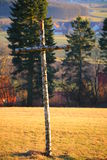 High saturation shot of birch cross in sunlight.  Royalty Free Stock Image