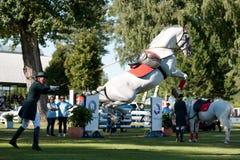 High school dressage of Lipizzan stallion Royalty Free Stock Images