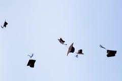High school graduation hats Stock Images