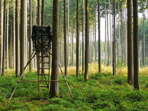 High seat in forest Stock Photography