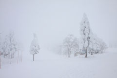High snow and mist in forest Royalty Free Stock Image