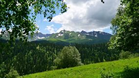 High snowy mountains and green summer forest on a background of tree leaves in the wind. Leaves of tree in the wind on a background of high snowy mountains stock footage