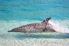 high speed дельфина Стоковые Изображения