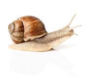 High-speed snail Stock Photo